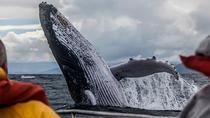San Diego Whale Watching Tour, San Diego, Day Cruises