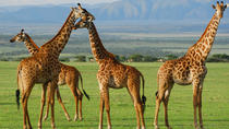 5-Day Lake Manyara Serengeti and Ngorongo Crater Camping Safari from Arusha, Arusha