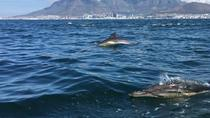 Marine Echo tours, Cape Town, Day Cruises