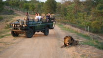 Safari Tour from Cape Town Including Lunch, Cape Town, Helicopter Tours