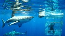 Shark Dive Tour From Cape Town, Cape Town, Shark Diving