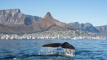 Whale Watching Tour from Cape Town, Cape Town, Dolphin & Whale Watching