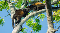Palo Verde National Park and Liberia Combo Tour, Liberia, Day Trips