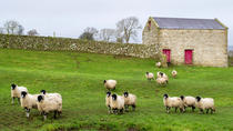 Full-Day, Small-Group Yorkshire Dales Winter Tour from York, York, Day Trips