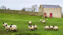 Full-Day Yorkshire Dales Tour from York in Summer
