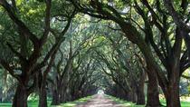 Whitney Plantation and Manchac Swamp Kayak Tour Combo, New Orleans, Kayaking & Canoeing