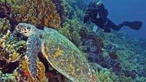 Hurghada Daily Scuba Dive Trip, Hurghada, Scuba Diving