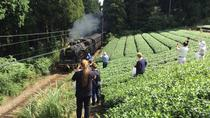 Authentic Japanese Tea Tasting at a Tea Plantation, Chubu, Coffee & Tea Tours