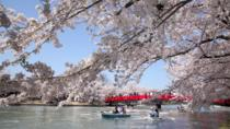 Private Cherry Blossom Tour in Hirosaki with a Local Guide, Tohoku
