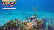 Amazing Snorkeling & Beach break in Cozumel, Cozumel, Ports of Call Tours