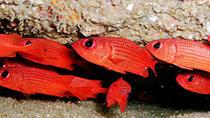 Discover Scuba Diving Around Los Cabos, Los Cabos, City Tours