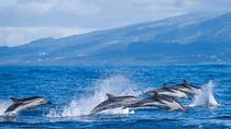 Full Day Big Truck Experience Tour: Lagoa do Fogo & Whale and Dolphins Watching, Ponta Delgada, ...