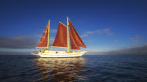 Port Phillip Bay Sailing and Yarra River Cruise by Traditional Timber Tall Ship from Melbourne, ...