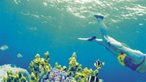 4-daagse tour Cairns en Great Barrier Reef, Cairns & the Tropical North, Multi-day Tours