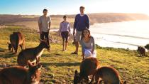 5-Day Adelaide and Kangaroo Island Tour Including Barossa Valley Wine Tasting, Adelaide, 4WD, ATV & ...