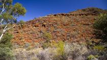 Excursión a Palm Valley 4WD desde Alice Springs, Alice Springs, 4WD, ATV & Off-Road Tours