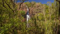 Litchfield National Park Day Tour from Darwin, Darwin, null