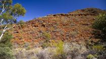 Palm Valley 4WD Tour from Alice Springs, Alice Springs, Half-day Tours