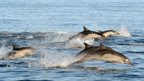 Port Stephens Day Tour with Dolphin Watching, Sandboarding, and Australian Wildlife, Sydney, Day ...