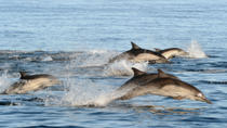 Port Stephens Day Trip with Dolphin Watching, Sandboarding and Australian Wildlife, Sydney