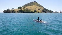 1-Hour Tauranga Harbour Scenic Cruise from Mount Maunganui, Tauranga, Day Cruises