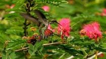 Trinidad Nature and Asa Wright Center Full-Day Tour from Port of Spain, Trinidad, Nature & Wildlife