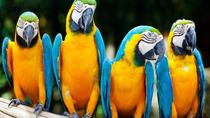 3-Day Excursion to Macaw Clay in Tambopata Natural Reserve, Puerto Maldonado, Multi-day Tours
