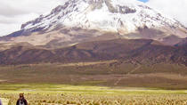 Sajama National Park Full-Day Tour from La Paz, La Paz, Full-day Tours