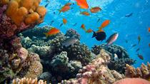 Blue Lagoon Snorkeling East Bali, Bali, 4WD, ATV & Off-Road Tours