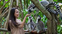 Zoo Admission with Revitalization Treatment Spa, Ubud, Attraction Tickets