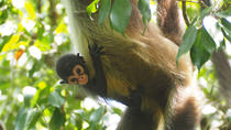 Private Day Trip to Cobá and Monkey Adventure at Punta Laguna, Playa del Carmen, Day Trips