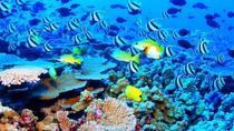 Cozumel Playa Mia Beach and Water Park with Catamaran Ride Plus Airport Transfer, Cancun, Water...
