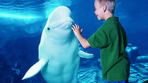 1-Day Admission to SeaWorld Orlando with Transport from Miami, Miami, Theater, Shows & Musicals