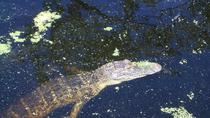 Private Swamp Tour in New Orleans, New Orleans, Private Sightseeing Tours