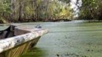 Southern Louisiana Private Swamp Tours, Louisiana, Custom Private Tours
