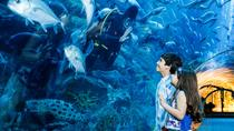 Dubai Aquarium en Underwater Zoo, Dubai, Kid Friendly Tours & Activities