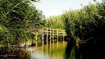 Al Azraq Wet Land Private Half Day Tour from Amman, Amman, Day Trips