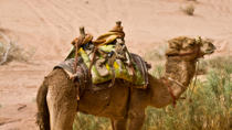Wadi Rum Tour from Aqaba with Overnight Bedouin Experience