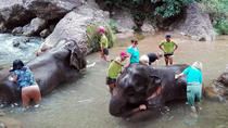 Full-Day Visit to Kalaw Elephant Sanctuary in Myanmar, Nyaungshwe, Day Trips