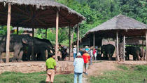 Full-Day Visit to Kalaw Elephant Sanctuary in Myanmar, Nyaungshwe
