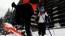 SnowShoe Tour near Brasov, Brasov, Ski & Snow