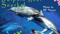 Kona Shore Excursion: Wild Dolphin - Reefs -Sea Caves -Kealakekua Bay Snorkel, Big Island of Hawaii