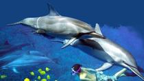 Kona Shore Excursion: Wild Dolphin - Reefs -Sea Caves -Kealakekua Bay Snorkel, Grande Isola di ...