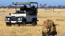 2-Day Camping Safari in Chobe National Park from Victoria Falls, Victoria Falls, Overnight Tours