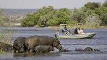 Chobe Extended Day Trip from Victoria Falls, Victoria Falls, Day Trips