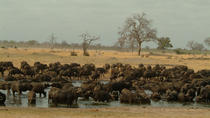 Full-Day Hwange National Park Tour from Victoria Falls, Victoria Falls, Day Trips