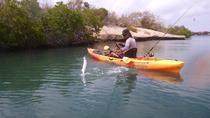 Kayak Fishing Adventure, Curacao, Kayaking & Canoeing