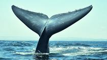 3-Day Chilean Experience Including Whale Watching from Valparaiso, Valparaíso, Multi-day Tours