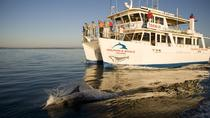 Jervis Bay Dolphin Watch Cruise, Jervis Bay, Dolphin & Whale Watching