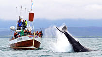 Traditionele Whale Watching Tour vanuit Húsavík, North Iceland, Dolphin & Whale Watching